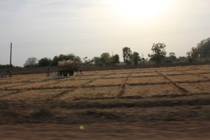 On the way to Jalore - one of Rajasthan's most gender biased districts.